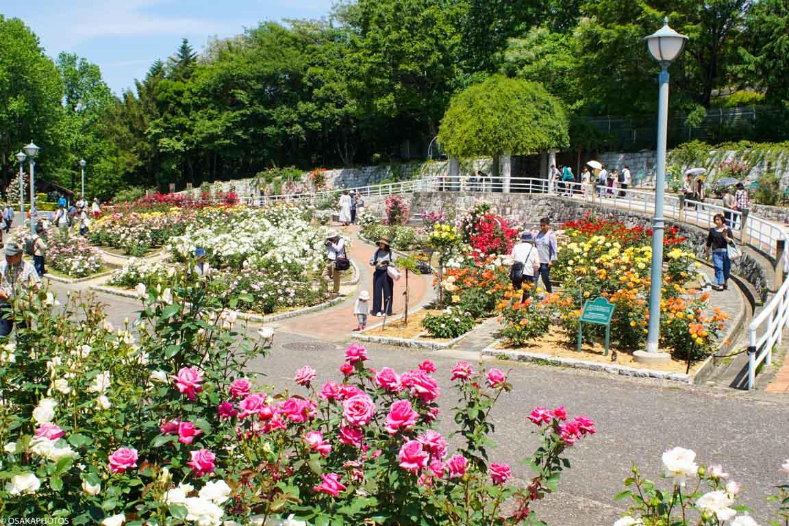 Rose Garden-07138