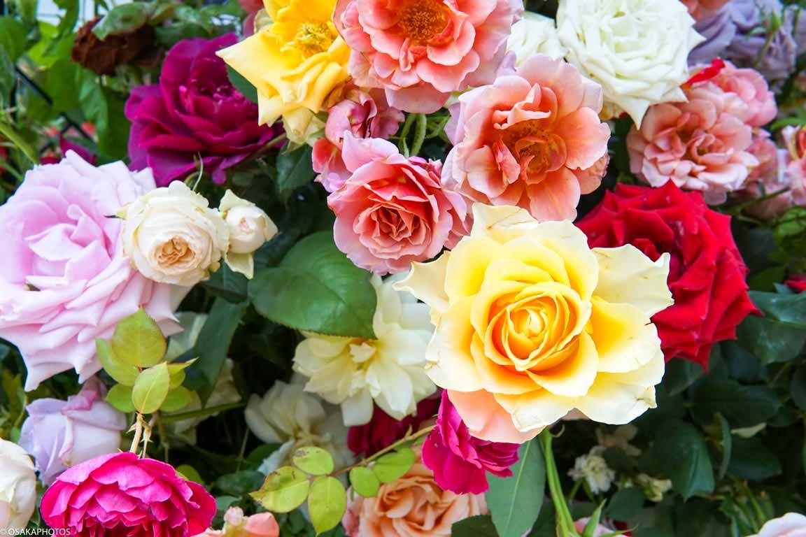 Rose Garden-07256