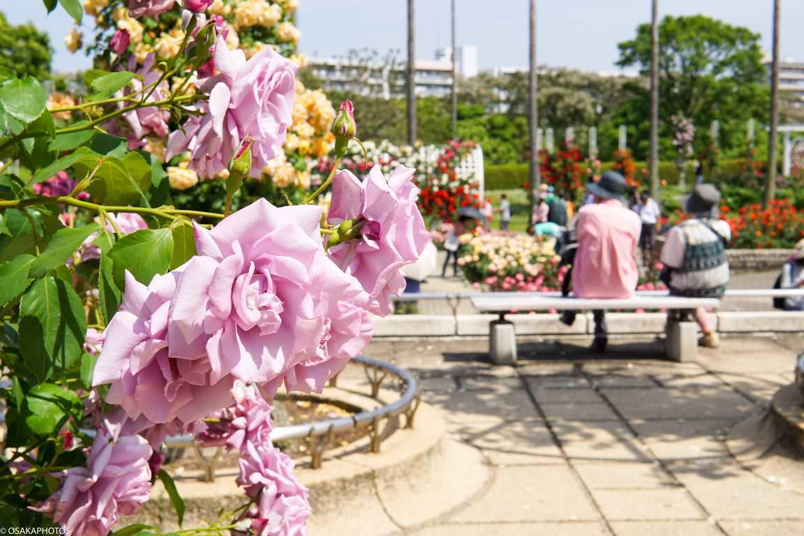 Rose Garden-07317