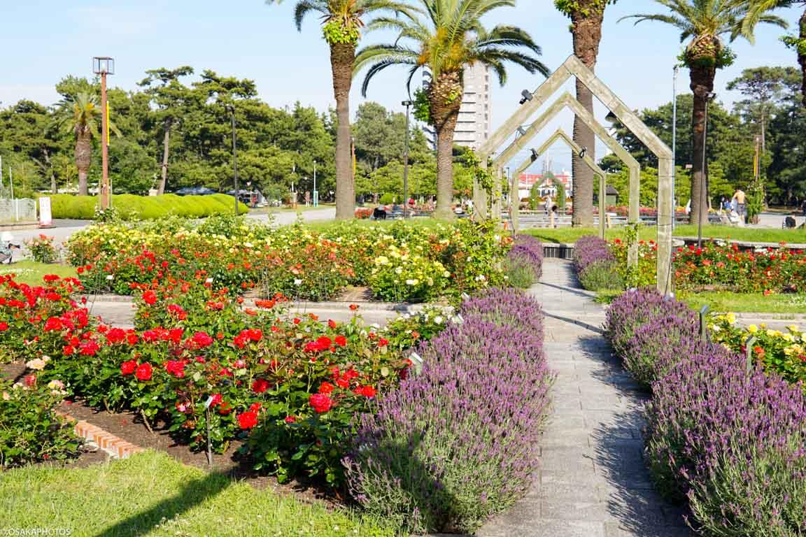 Rose Garden-07428