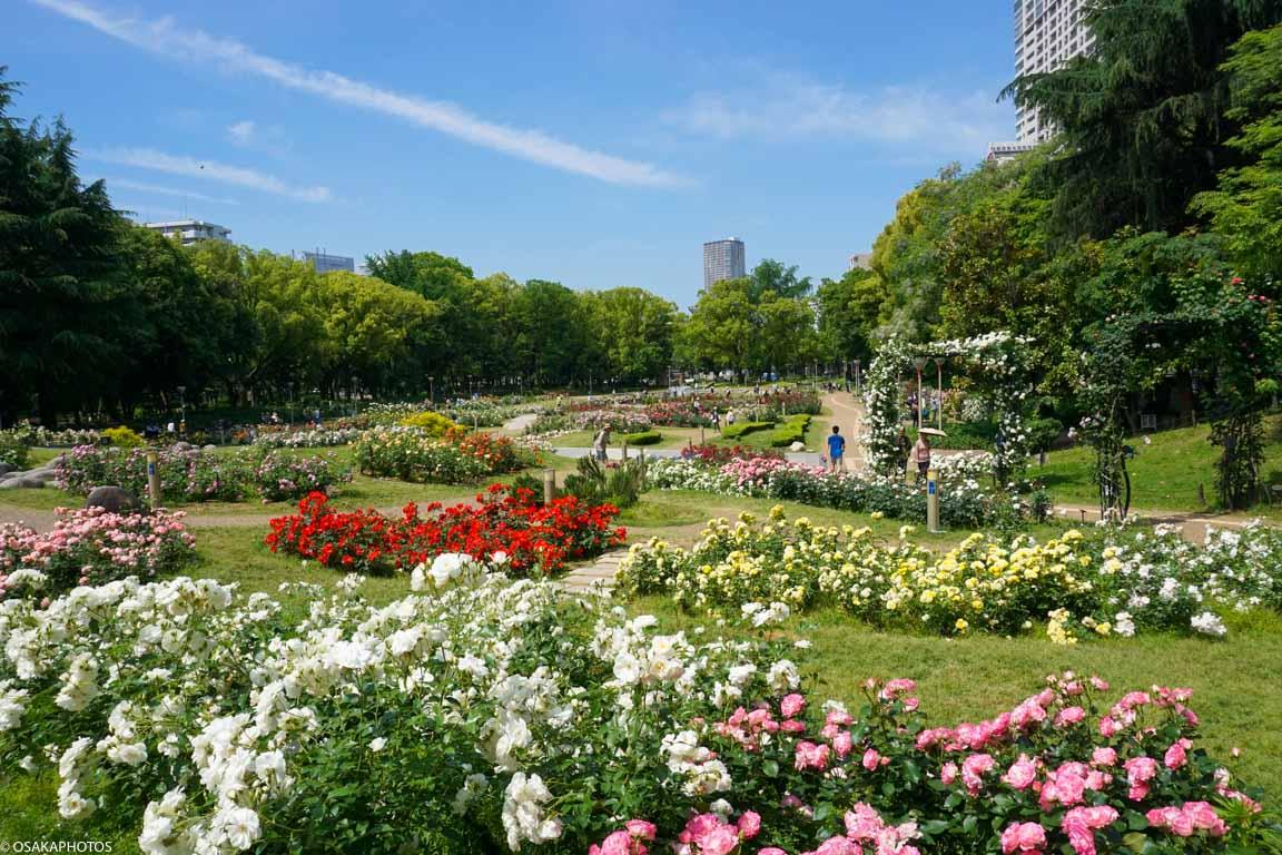 Rose Garden-09452