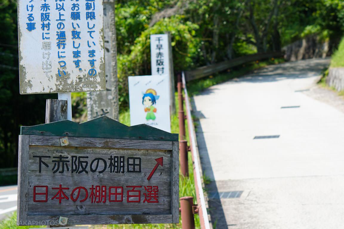 千早赤阪村 棚田-DSC09783