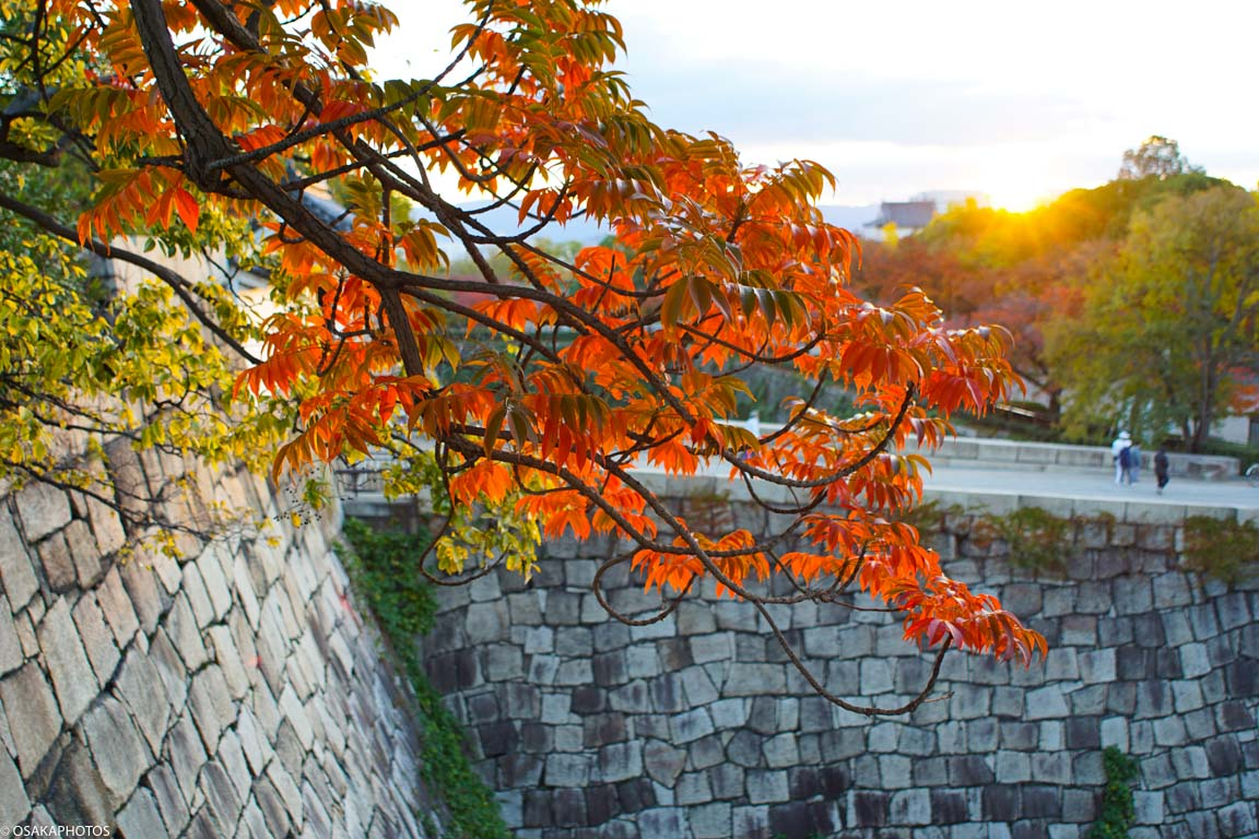 大阪城紅葉-08606