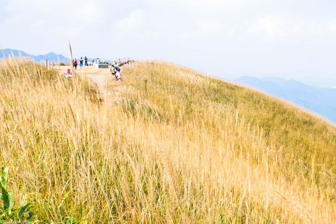 岩湧山ススキ-08119
