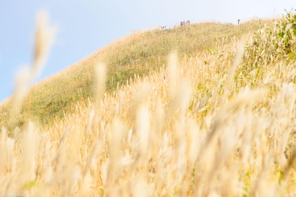 岩湧山ススキ-08205