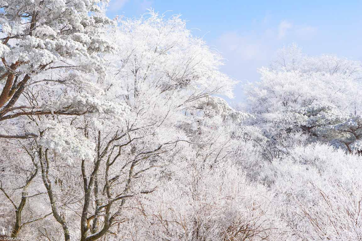 冬の金剛山-3