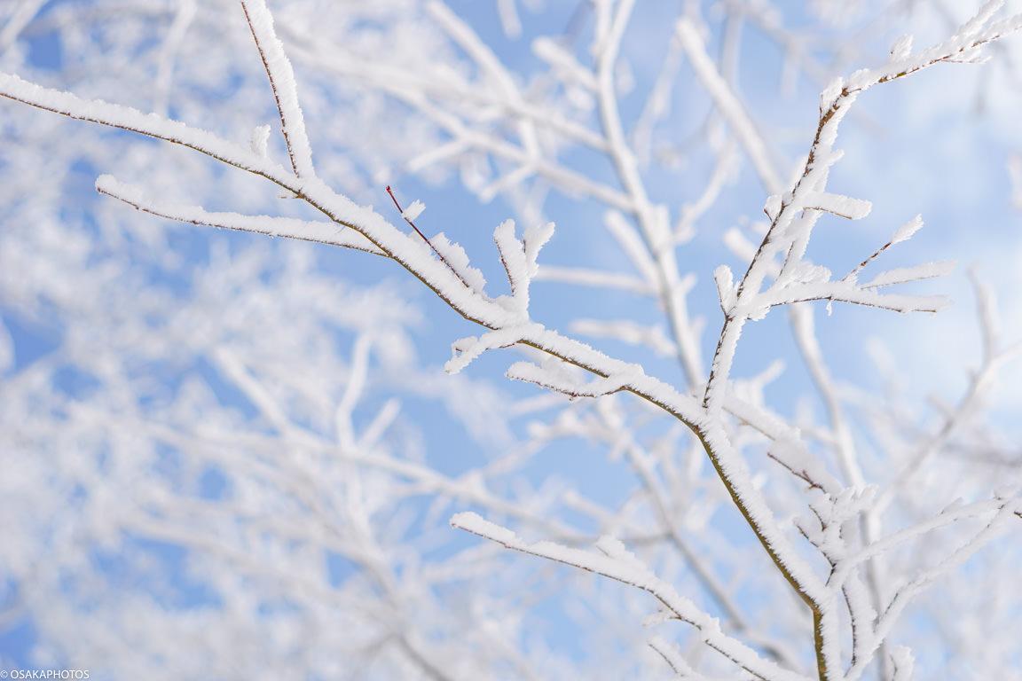 冬の金剛山-4