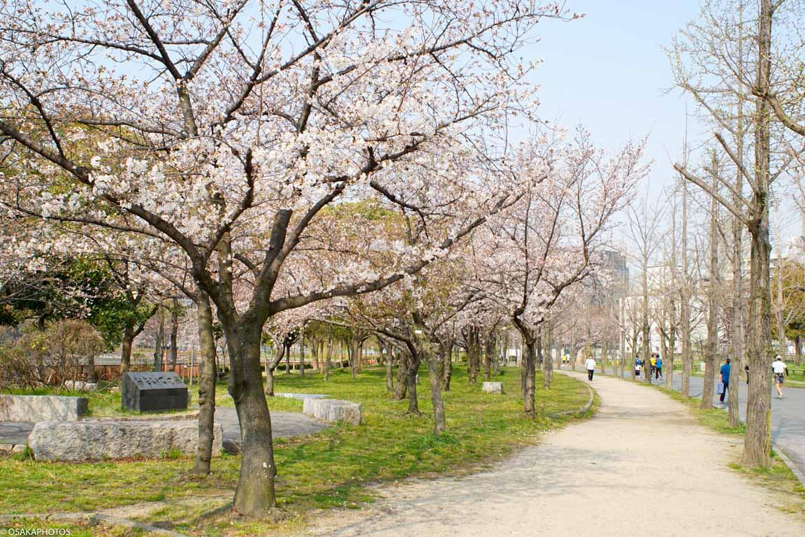 大阪城桜2018-04217