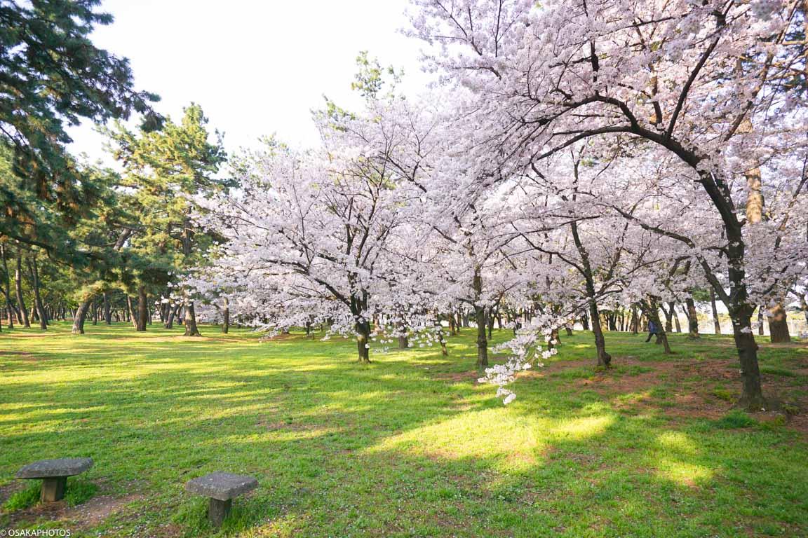浜寺公園-2