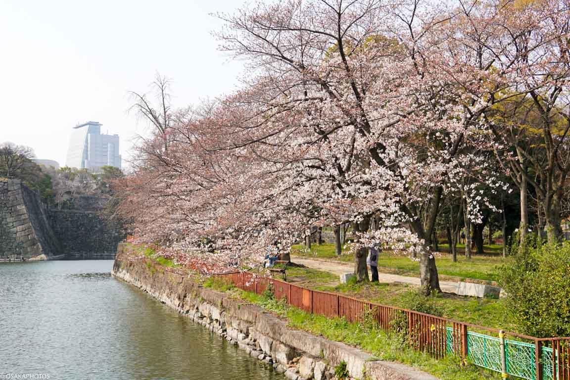 大阪城桜2018-04224