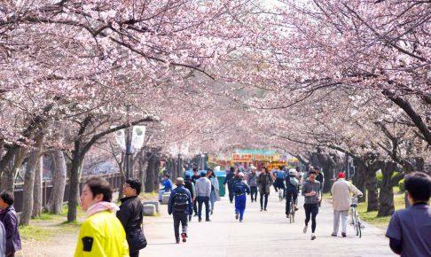 大阪城桜2018-04325