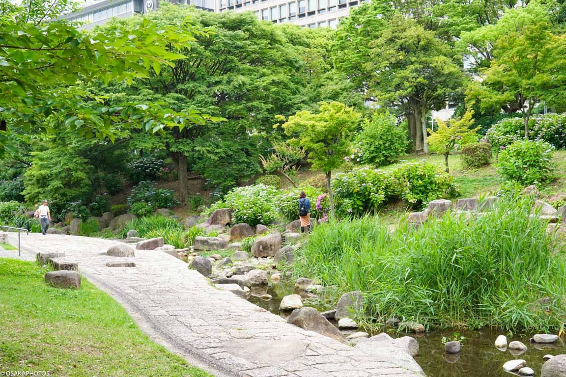 大阪城 紫陽花-08645