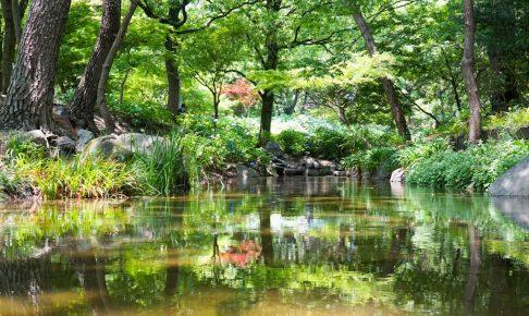 長居植物園 紫陽花-2