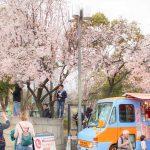 大阪城公園ベニスモモ-00248