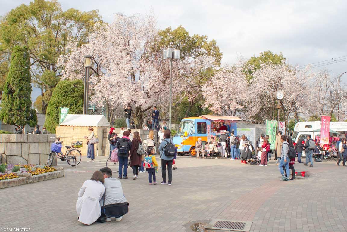 大阪城公園ベニスモモ-00251