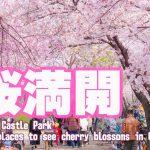 大阪城公園桜-00454-2