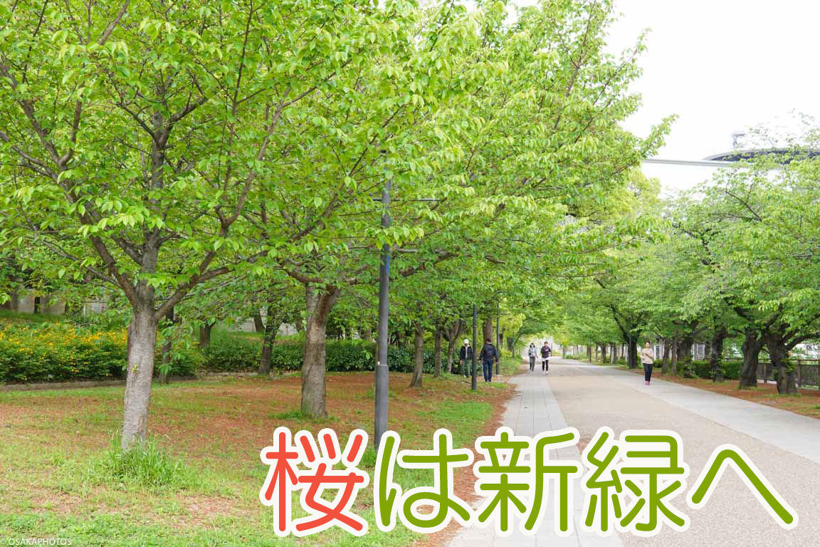 大阪城公園 藤-00726-2