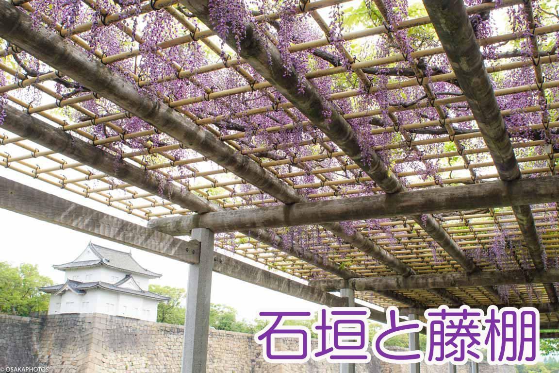 大阪城公園 藤-00743-2