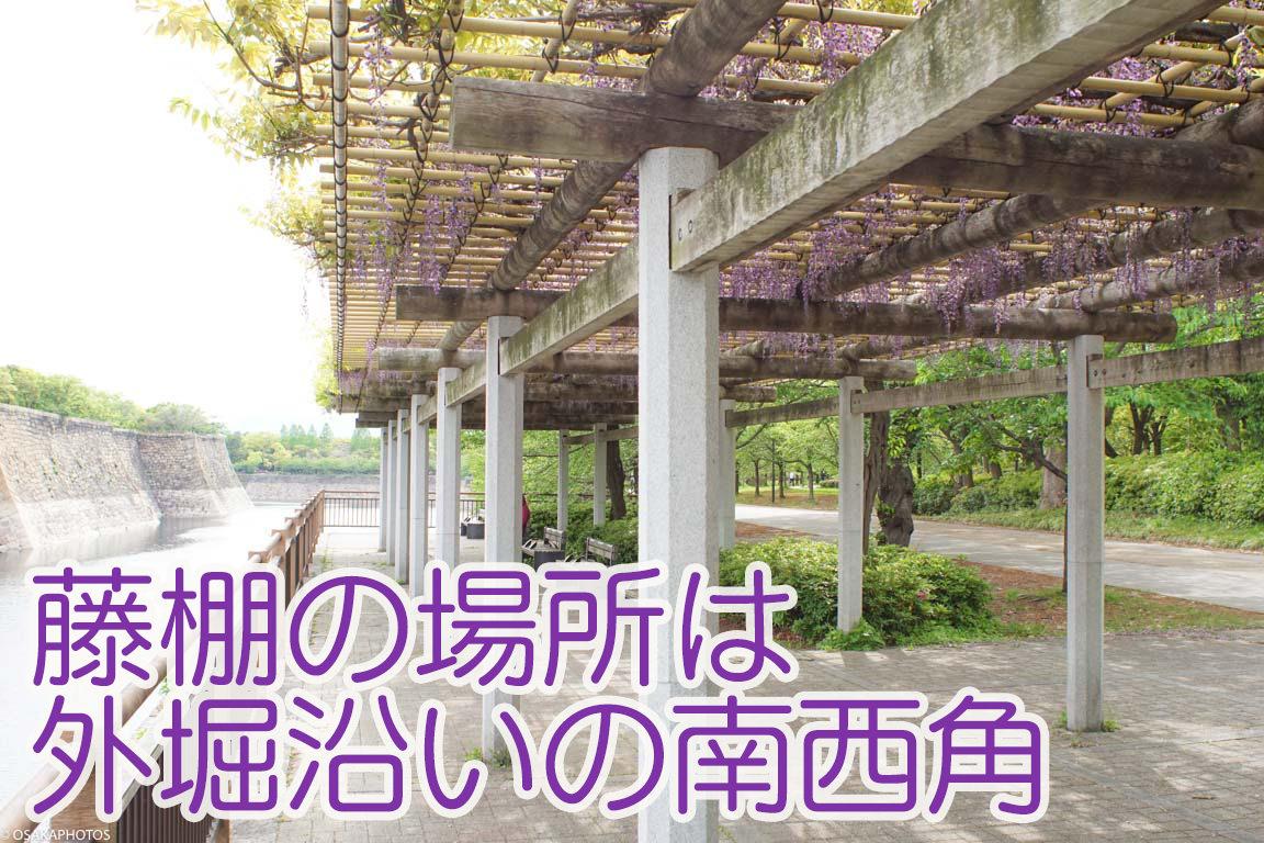 大阪城公園 藤-00761-2