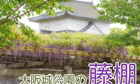 大阪城公園 藤-00766-2