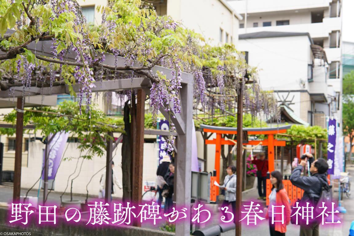 野田藤-00855-2